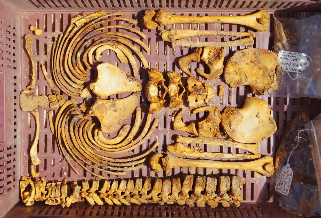 The arms and torso of a juvenile skeleton from the North Tombs Cemetery. (Mary Shepperson/Courtesy of The Amarna Project)