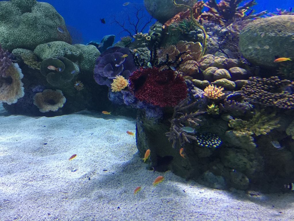 The coral in the Red Sea tanks is artificial, but closely imitates the features of the real thing (Jessica Steinberg/Times of Israel)