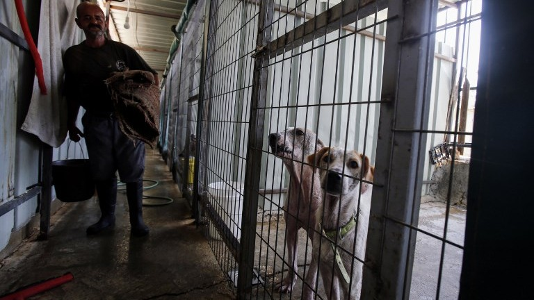 A Palestinian worker helps take care of dogs at the first dog shelter in the West Bank, in the town of Beit Sahour, on August 25, 2017. (AFP Photo/Musa Al Shaer)
