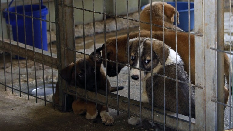 A picture taken on August 25, 2017, shows dogs at the first dog shelter in the West Bank, in the town of Beit Sahour, on August 25, 2017. (AFP Photo/Musa Al Shaer)