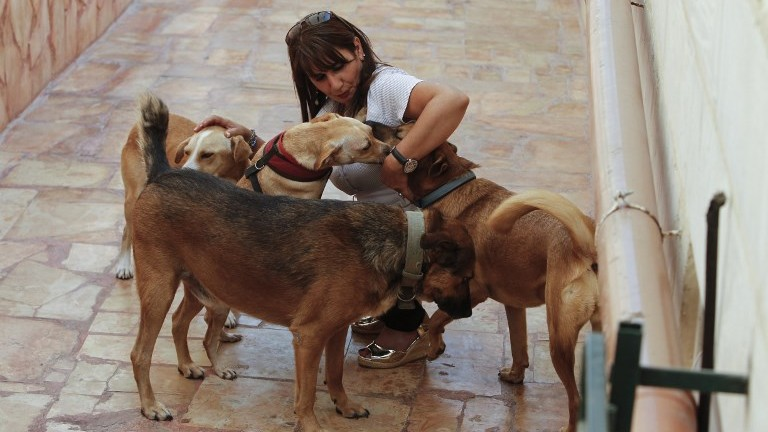 Diana Babish, an ex-banker from the Palestinian city of Bethlehem, takes care of dogs at the first dog shelter in the West Bank, in the town of Beit Sahour, on August 25, 2017. (AFP Photo/Musa Al Shaer)