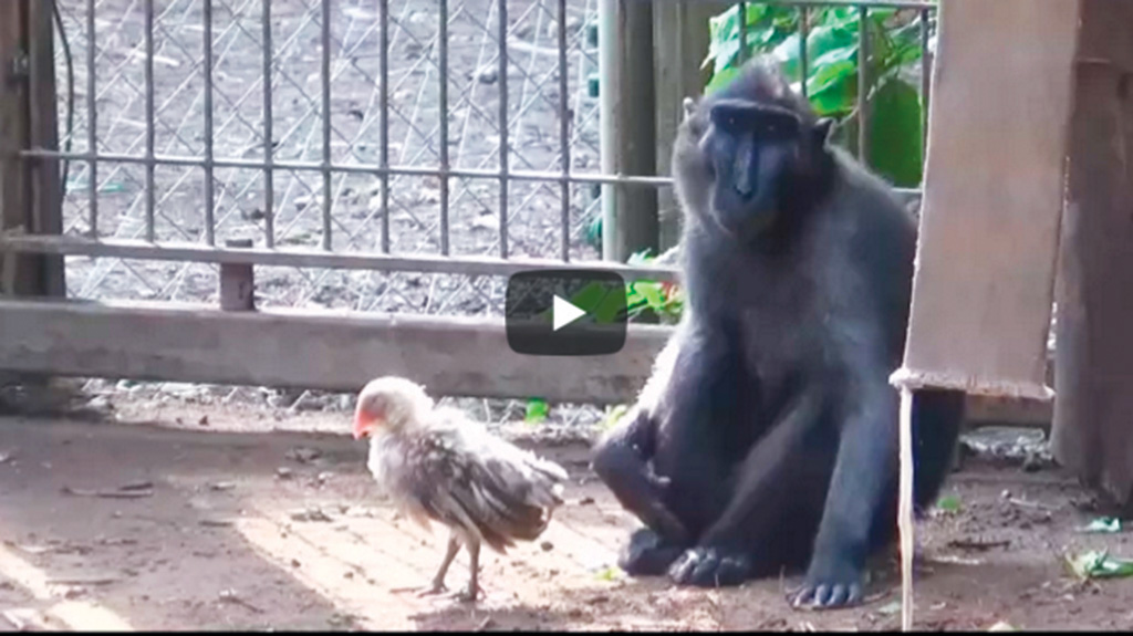 A Monkey And A Chicken Have Become Best Friends At An Israeli Zoo - The 12 best zoos in the world