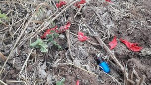 suspected explosive device connected to a cluster of balloons from the Gaza Strip, which landed in a field in southern Israel on March 24, 2019. (Sha'ar Hanegev Regional Council)