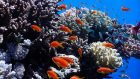 red-sea1-640x400