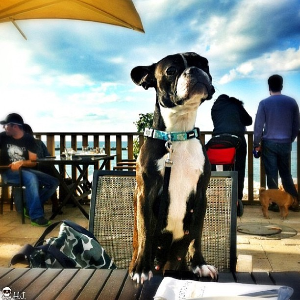 December 30, 2012 - #timesofisrael photo of the day: A dogs life in #israel . Photo by @hilitj