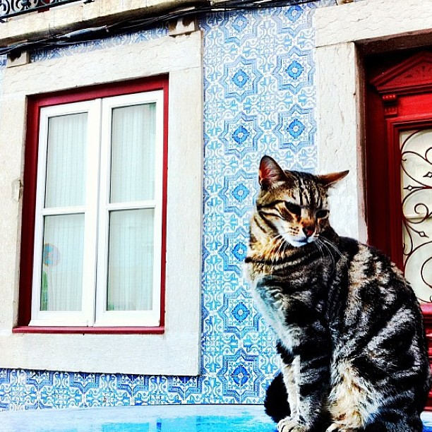 December 26, 2012 - #timesofisrael Photo of the Day: A cat ponders her next move. Photo by @edenrogel