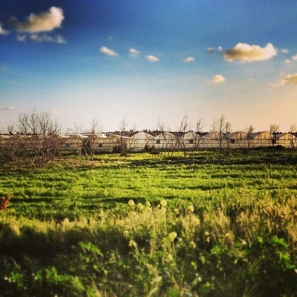 #timesofisrael photo of the day - march 6, 2013 - a quiet moshav in #israel. Photo by @nyshop