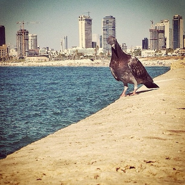 December 18, 2012 - #timesofisrael Photo if the Day: Tel Aviv Seascape. Photo by @itaistern