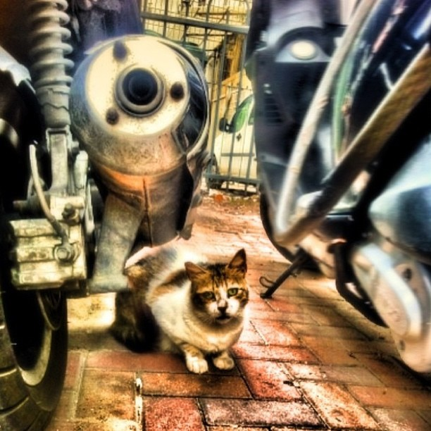 December 20, 2012 - #timesofisrael Photo of the Day: A #telaviv Cat. With Attitude. Photo by @dolev_lankri