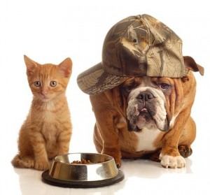 AJT Cat and Dog