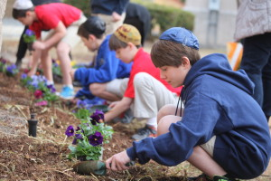 CUTLINE Epstein School students show their commitment to service by participating in a Tu B'Shevat project in which a Kesher Garden was planted at the Sandy Springs school and in Israel. (photo by Coleen Lou)