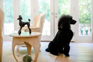 Paris, the Harrises' standard poodle, poses next to bronze poodle.
