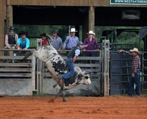 Bull riding is a feature of the Westgate River Ranch Rodeo.