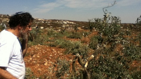 The author surveys the damage to olive groves outside the Palestinian village of Mreyer (photo credit: courtesy)
