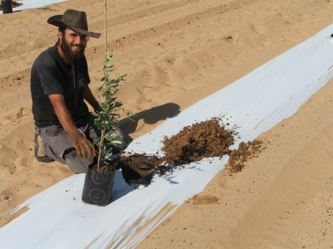 Planting the trees. Zion Leshem and a sapling, 2008 (photo credit: courtesy)