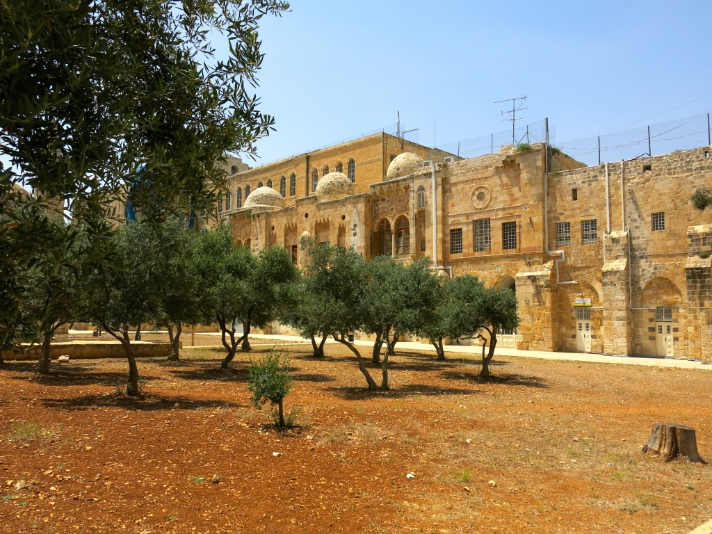 The olive grove beside the Dome. (photo: Qanta Ahmed)