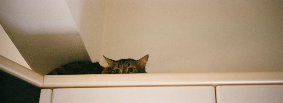 Mao the cat (photo courtesy of Wai Wong)