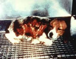 animal testing image 1
