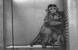 animal testing image 3