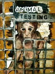 animal testing image 4