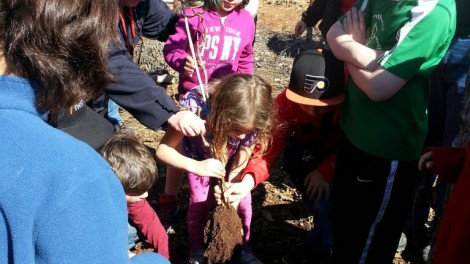 Planting a Tree on the Border