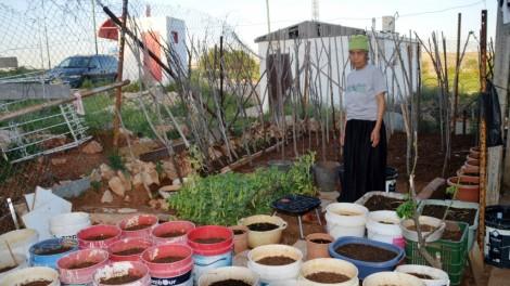 image poor garden in pots.