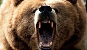 mama-bear-300x225