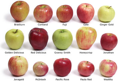 apple-types
