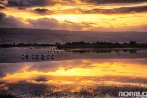 migrating-birds-hula-valley-israel
