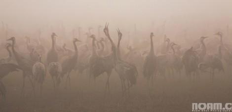 migrating birds at hula lake park