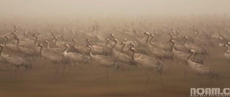 migrating birds at hula lake park Israel