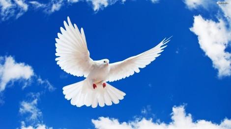 peace_wallpaper_3ebdf