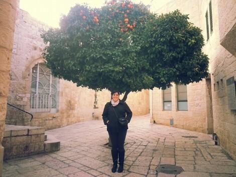 Orange Tree in the Rova HaYehudi