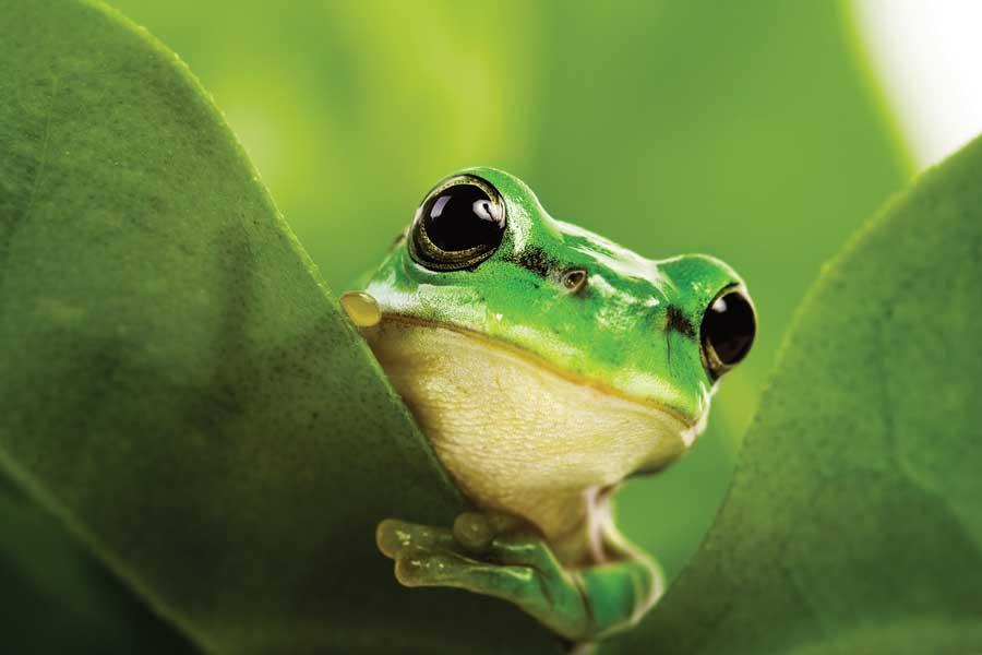 green biodiversity frog (1)