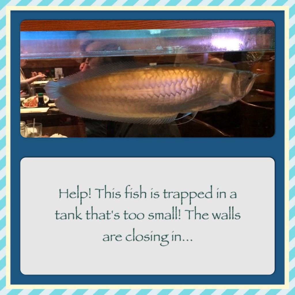 Fish in Tank