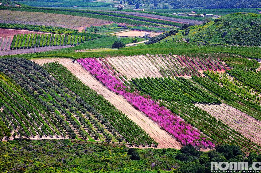 israel-upper-galilee-slopes