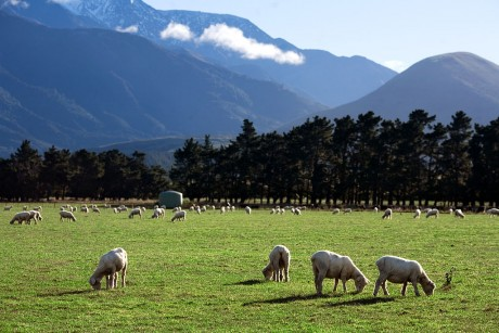 New Zealand farmland, where Bentwich first conceived of CropX. (Credit: Jorge Royan  http://www.royan.com.ar/ )