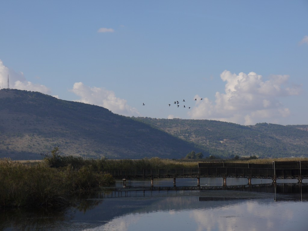 Hula-Birds-V