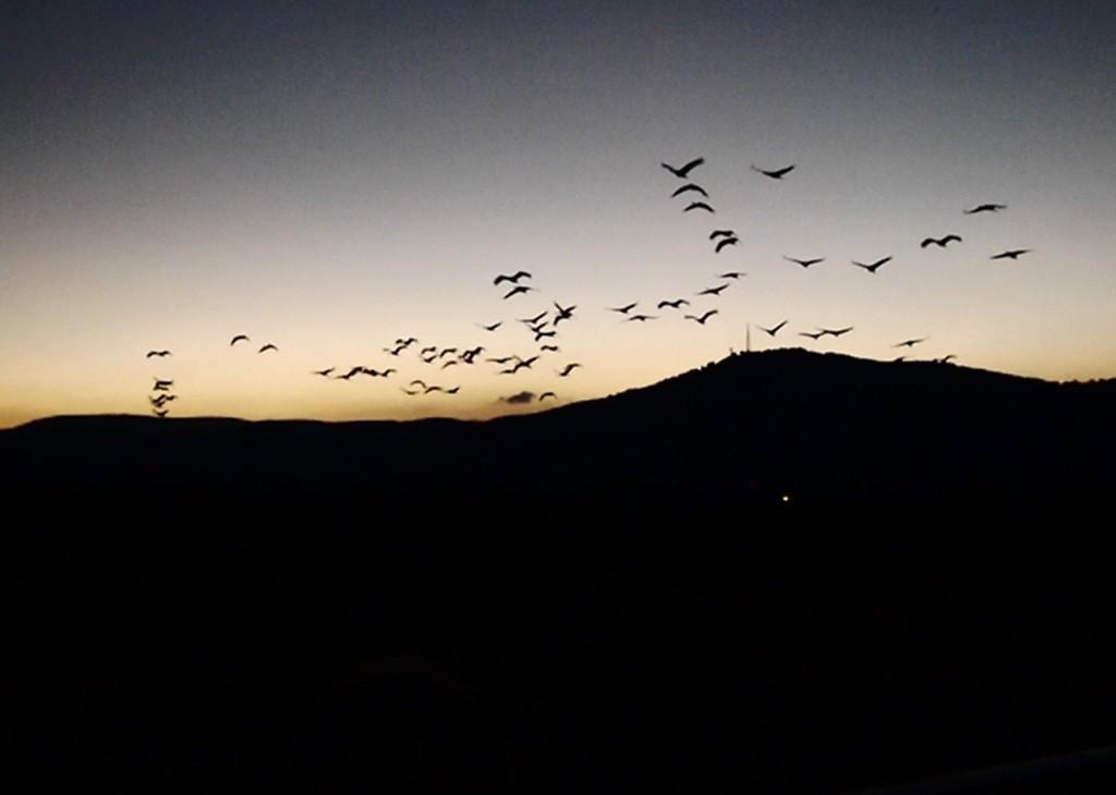 Hula birds at night