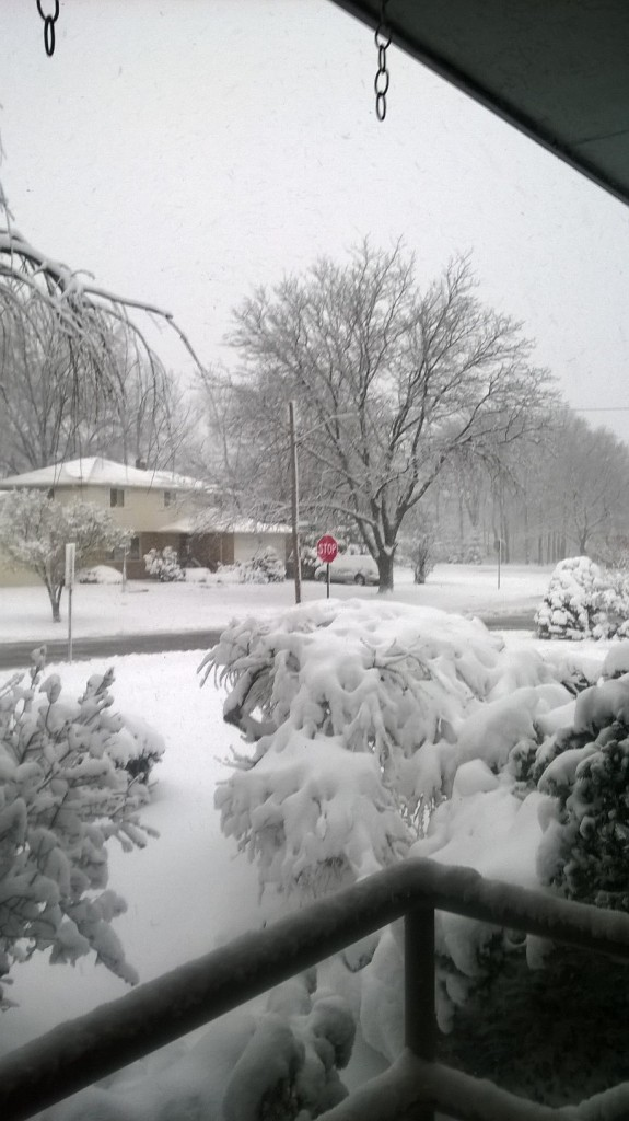 April in Cleveland,from my relatives' porch.