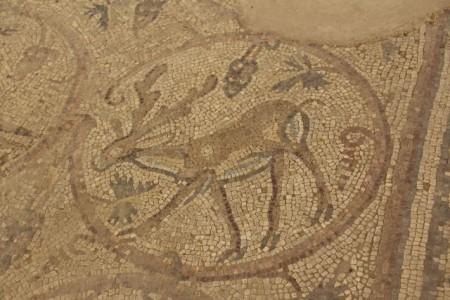 Antelope oldsm