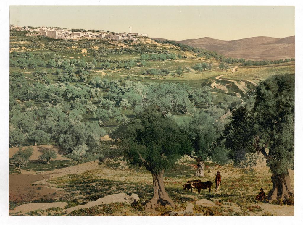 biblical landscape