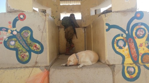 Guard and dog