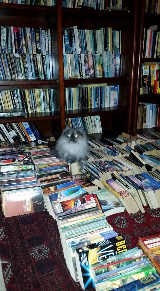 Our intellectual cat Micky Blue Paws resting on top of my husband's books.