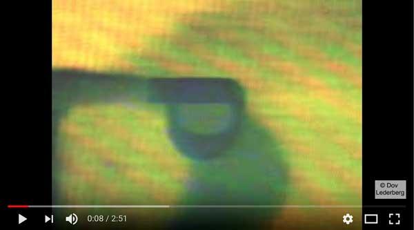 samach-video