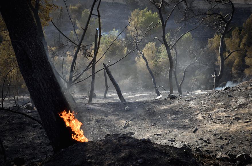 Trees aflame in the northern Israeli city of Haifa, November 25, 2016. (Gili Yaari /Flash90)
