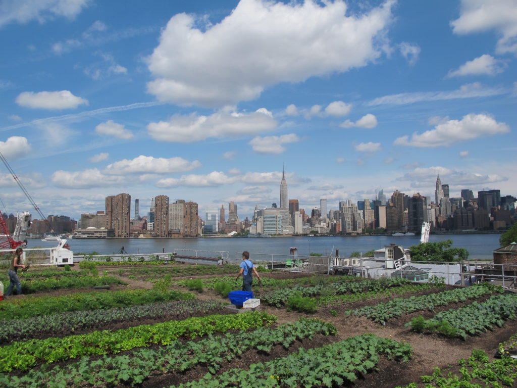 Three stories up in the air, the power of an idea and fresh food is growing! The Eagle Street Rooftop Farm is an internationally acclaimed greenroof and commercially operated vegetable farm atop a three story warehouse in Brooklyn, New York.