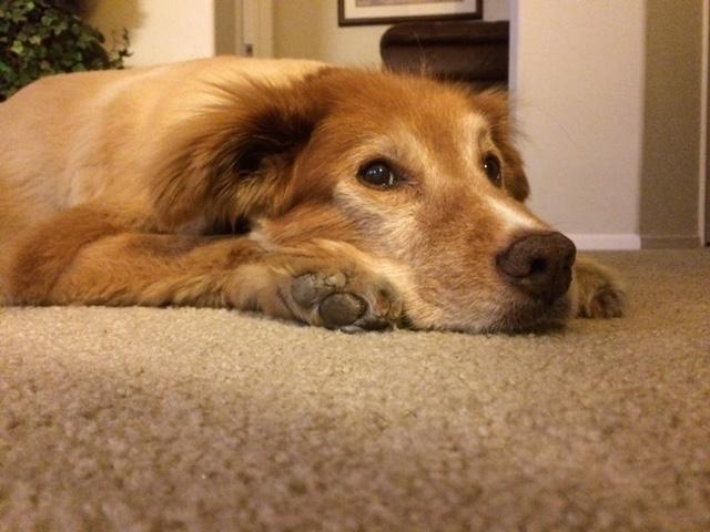 buddy-resting