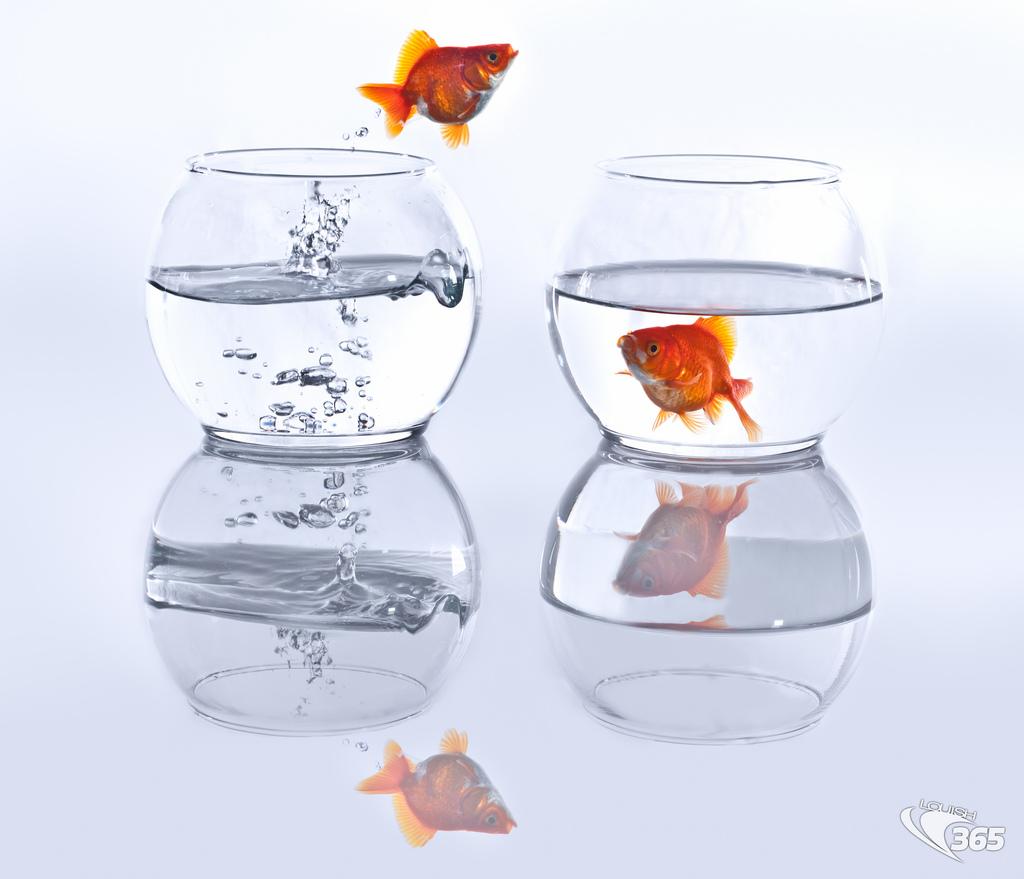 change - jumping goldfish