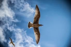 dream - bird